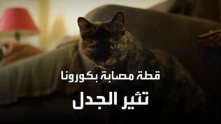 قطة تصاب بكورونا وثير الجدل في فرنسا