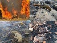 حرائق الغابات تشعل غضب الإيرانيين..  والحكومة غائبة