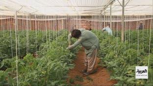 أمن الغذاء مسؤولية مشتركة للدول في ظل أزمة كورونا