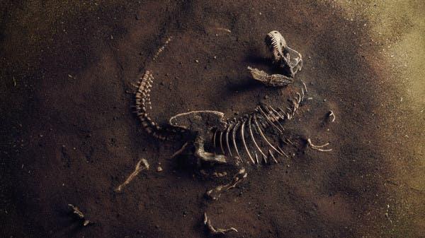 هذا هو سبب انقراض نصف أنواع الكائنات الحية على الأرض!