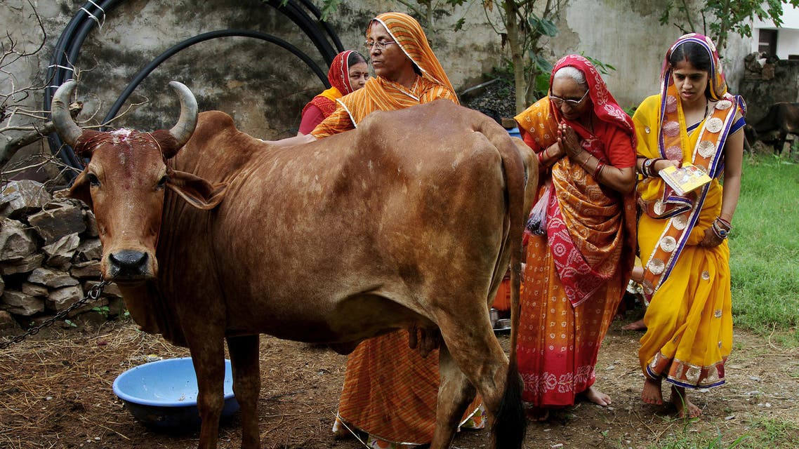 Women worship a cow, an animal held sacred by Hindu beliefs, to seek blessing for their male child during Bach Baras festival in Ajmer, India August 29, 2016. (Reuters)