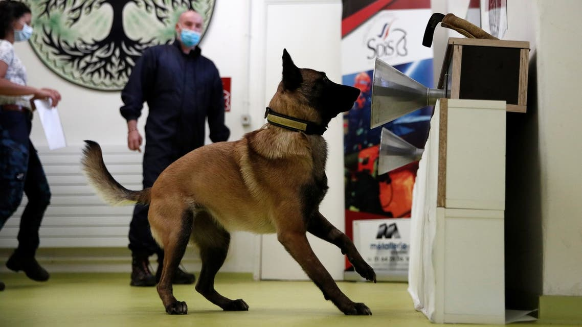 A dog training to sniff out coronavirus at the Alfortville national veterinary school in Maison-Alfort, France, May 19, 2020. (File photo: Reuters)