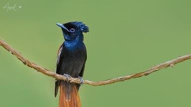 بالصور.. طيور نادرة تعيش جنوب السعودية وهذه تفاصيلها