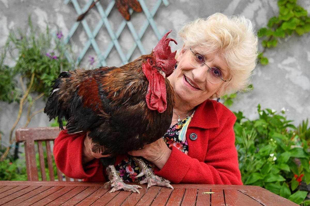 In this file photograph taken on June 5, 2019, Corinne Fesseau (R) poses with her rooster Maurice in her garden at Saint-Pierre-d'Oleron in La Rochelle, western France. (AFP)