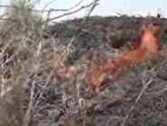 فيديو.. قصف حوثي يحرق مزرعة مواطن بالحديدة