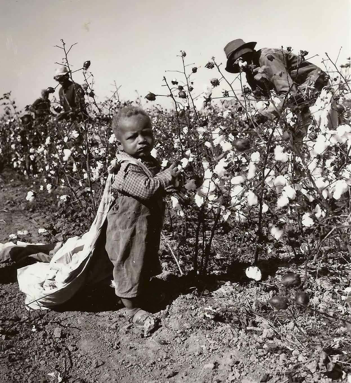 صورة لطفل أفريقي بمزارع القطن