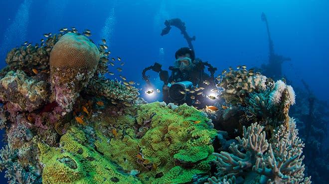 A diver underwater in Umluj, Saudi Arabia. (Saudi Ministry of Tourism)