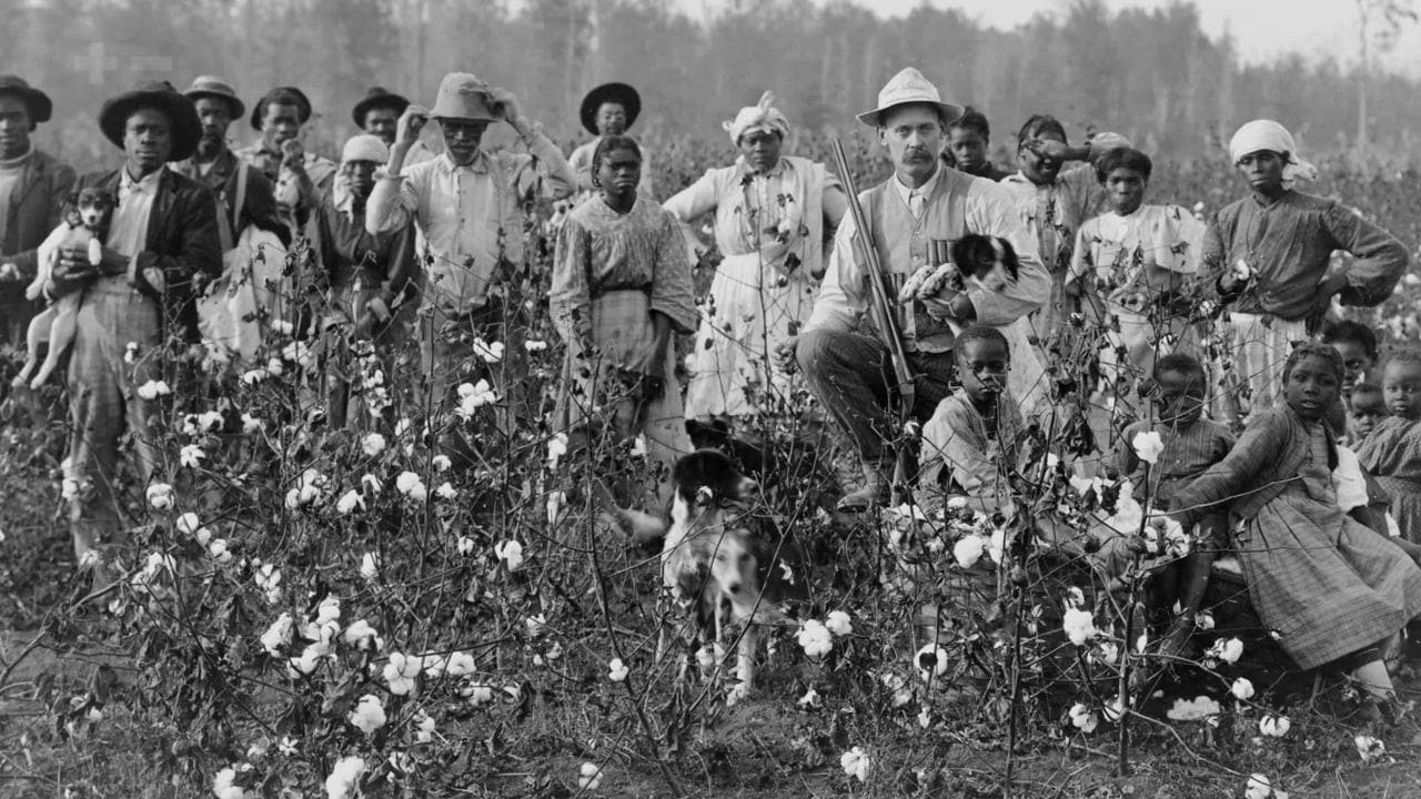 صورة تجسد عددا من ذوي الأصول الإفريقية أثناء عملهم بمزارع القطن