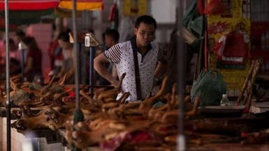 بالتزامن مع أزمة كورونا.. مهرجان للحوم الكلاب في الصين