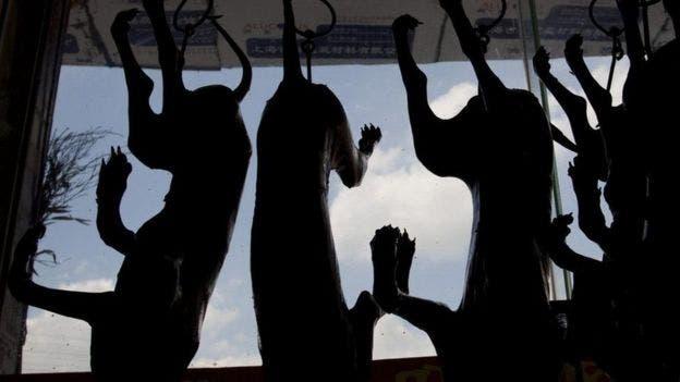 لحوم كلاب في الصين