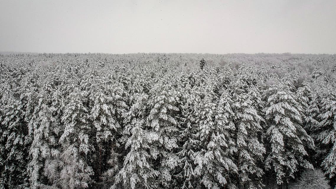 This aerial picture taken on February 13, 2019 shows a forest covered with snow near the village of Troitskoye outside Moscow.