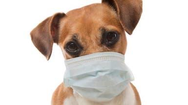 نفوق أول كلب أصيب بفيروس كورونا في الولايات المتحدة