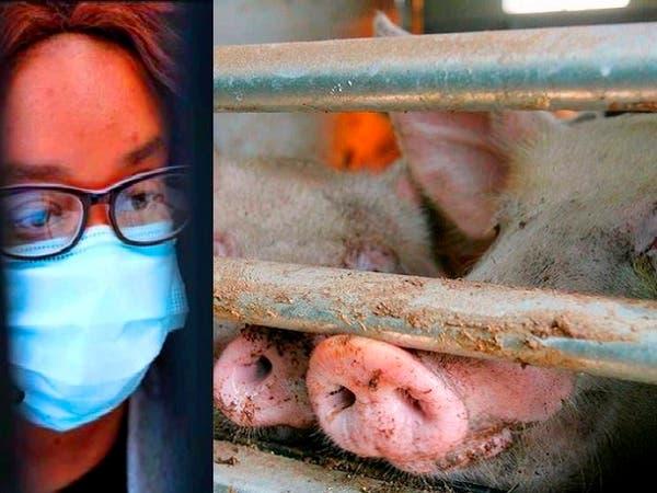 فيروس خنزيري يظهر بالصين ويدق ناقوس الخطر من وباء جديد