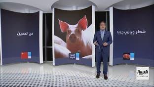 من الصين بلد كورونا.. وباء آخر يهدد البشرية ينتقل من الخنازير للإنسان