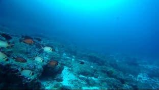 دراسة بيئية مثيرة تتحدث عن انقراض الأسماك من البحار