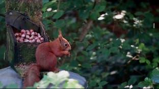 مشاهد رائعة لاستيلاء الحيوانات والنباتات على الأماكن العامة خلال كورونا