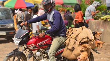 لحم الكلاب بات محظوراً في ولاية هندية نائية بعد تحرك شعبي