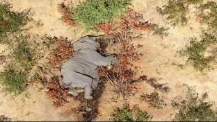 مخاوف من فيروس وراء نفوق مئات الفيلة