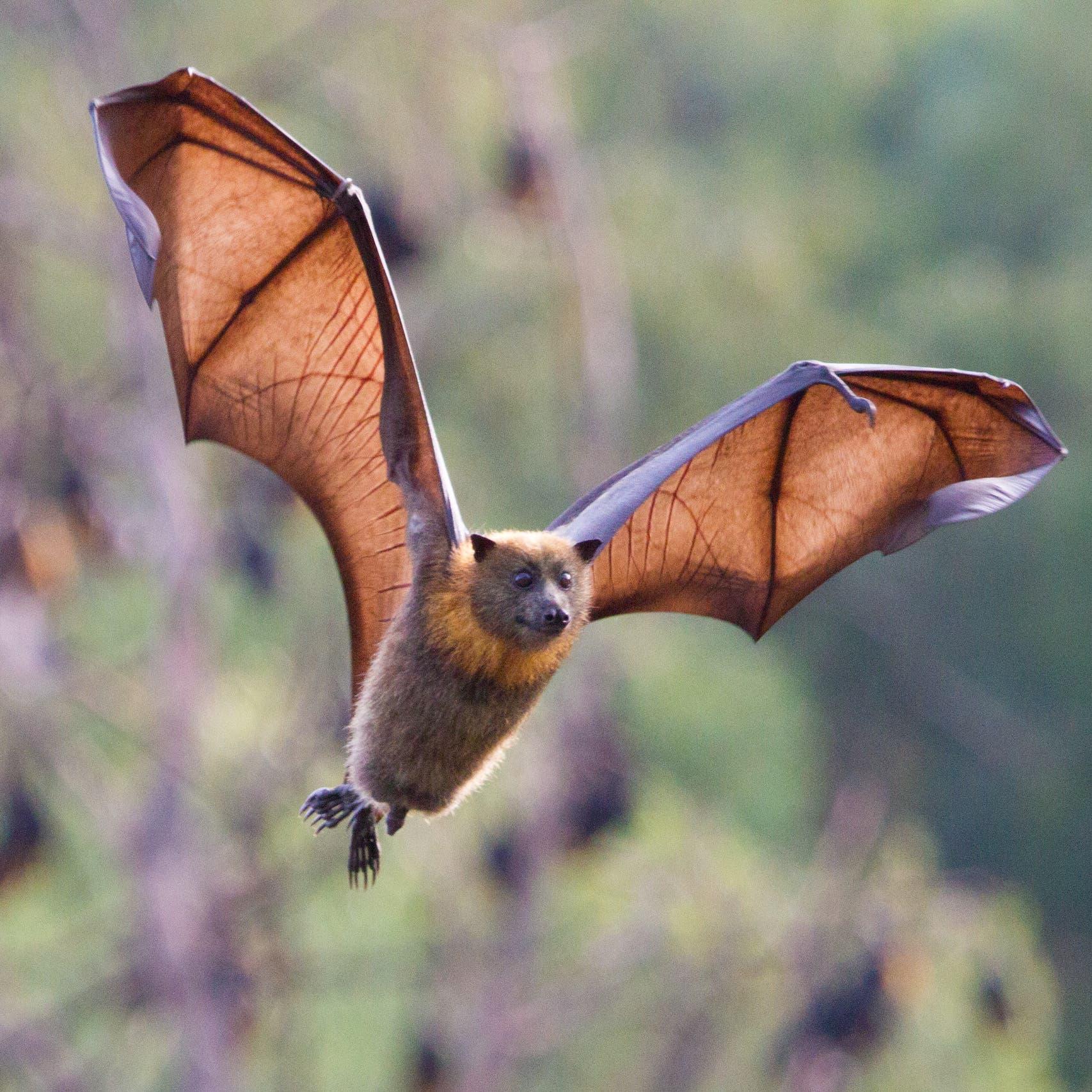 كهوف الخفافيش جنوب الصين تكشف أسراراً عن كورونا