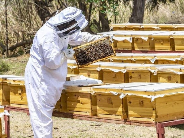 هذه إحدى أهم وجهات السعودية.. مدينة الـ 800 طن من العسل