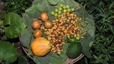 الاحسا رنگا رنگ اور خوش ذائقہ پھلوں اور سبزیوں کا مرکز
