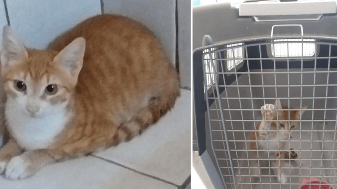 The six-month old cat Pupi after in good health. (Twitter/via Courthouse News)