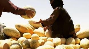 حاصلات خربزه در نیمروز افغانستان به بیش از 700 هزار تٌن رسید