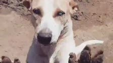 Watch: Heartwarming video of blind dog in Egypt recognizing shelter worker goes viral