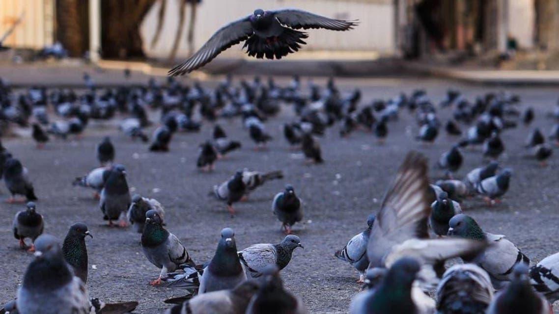 KSA: Haram makki Photography