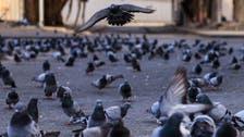 حرم مکی کے کبوتروں کا قصہ ، سعودی فوٹو گرافر کے کیمرے کی آنکھ سے