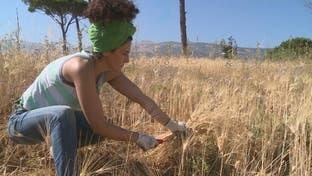 مبادرات زراعية في لبنان لمواجهة الأزمة الاقتصادية
