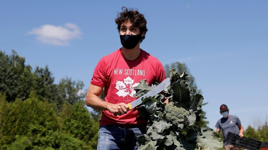 Canada's Prime Minister Justin Trudeau harvests broccoli at an Ottawa Food Bank farm on Canada Day in Ottawa, Ontario, Canada. (Reuters)