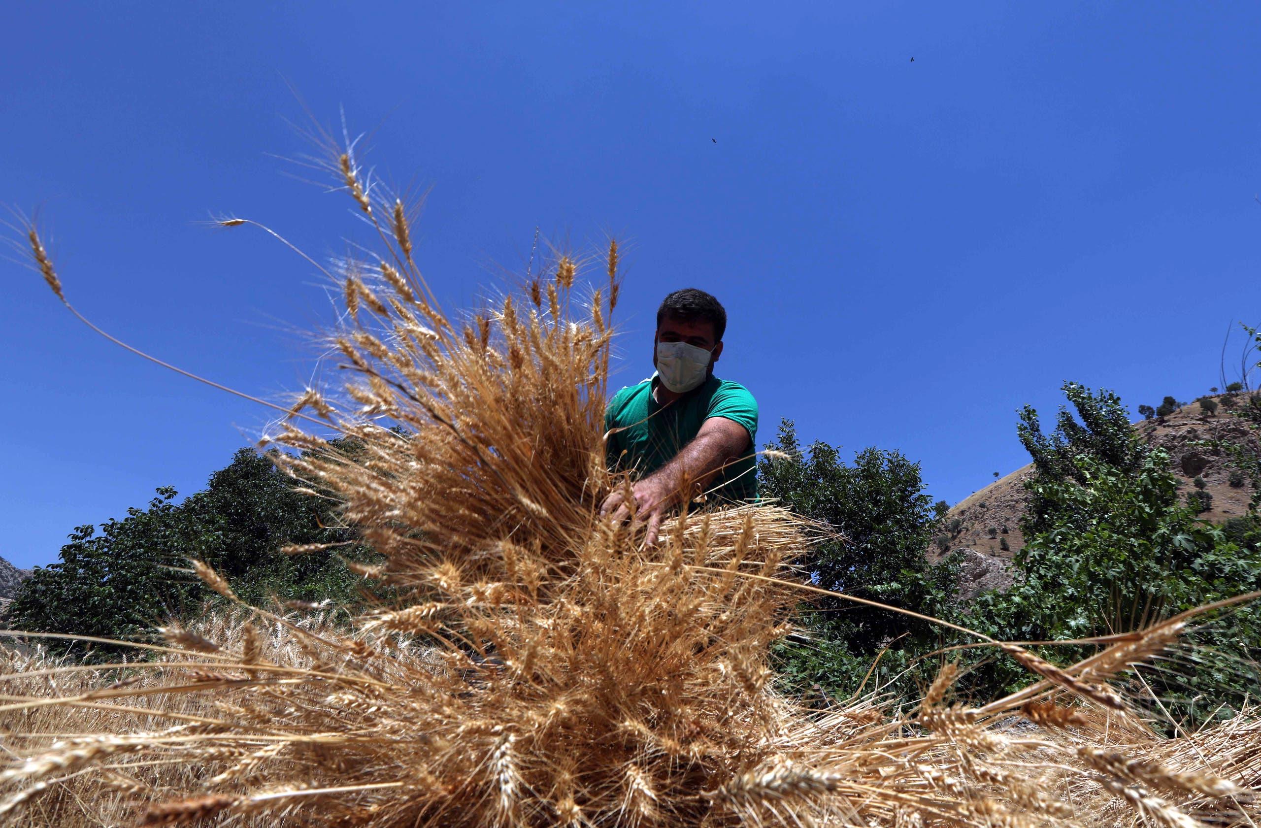 مزارع في العراق (فرانس برس)