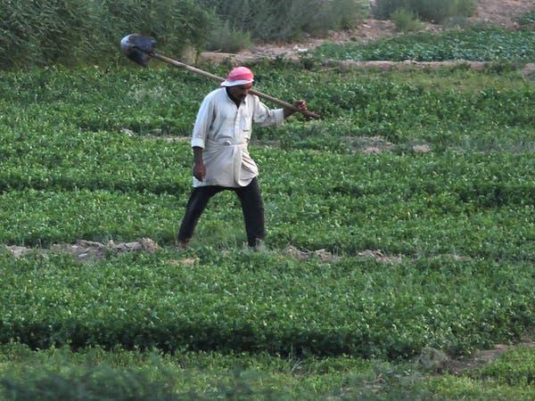 مزارعو العراق يهللون.. وداعاً لمنتجات إيران وتركيا