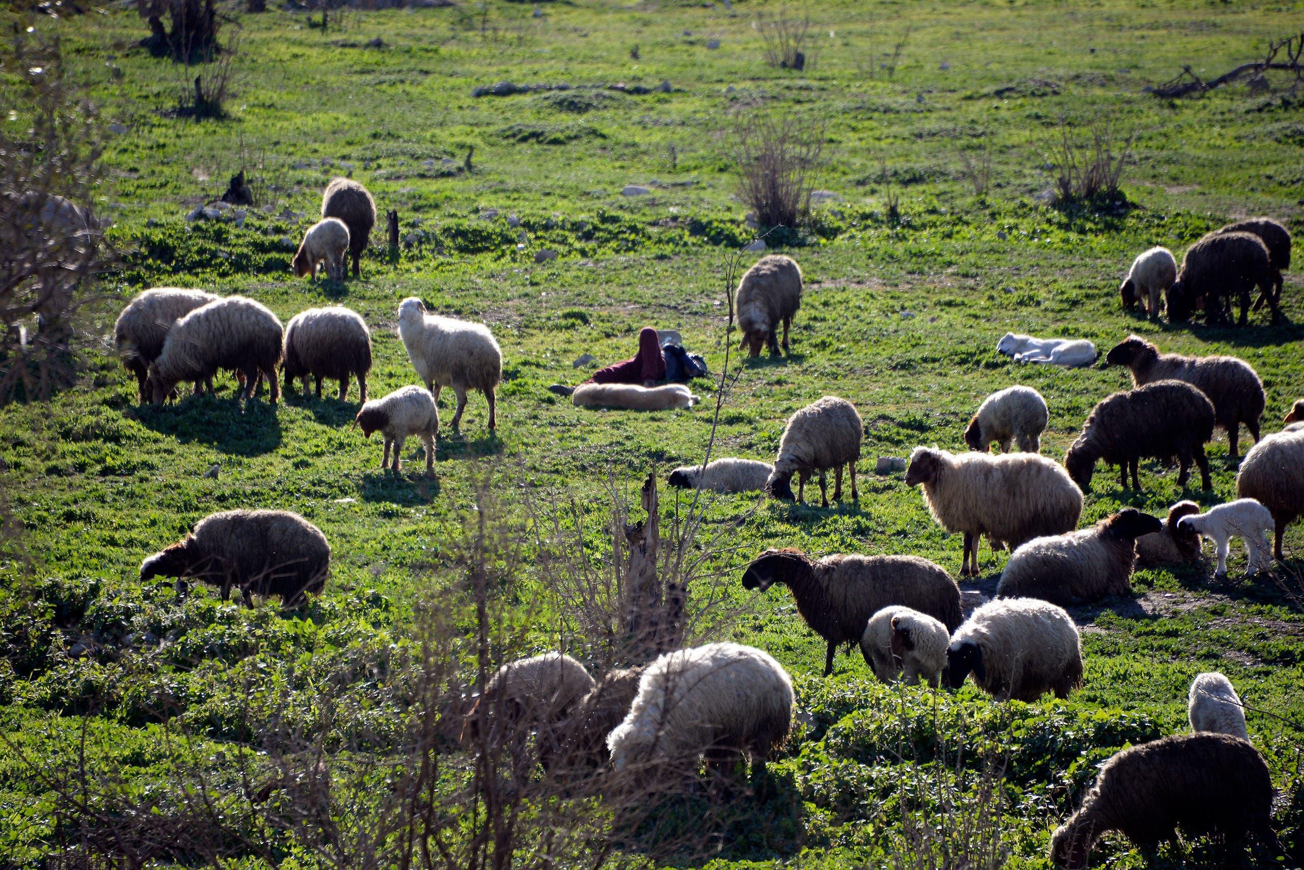 مزرعة في العراق (فرانس  برس)