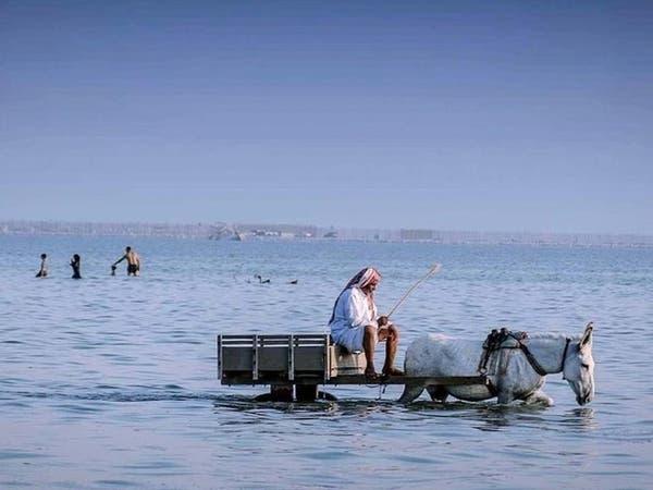 """صور غريبة.. صيد الأسماك بواسطة """"الحمير"""" في القطيف"""