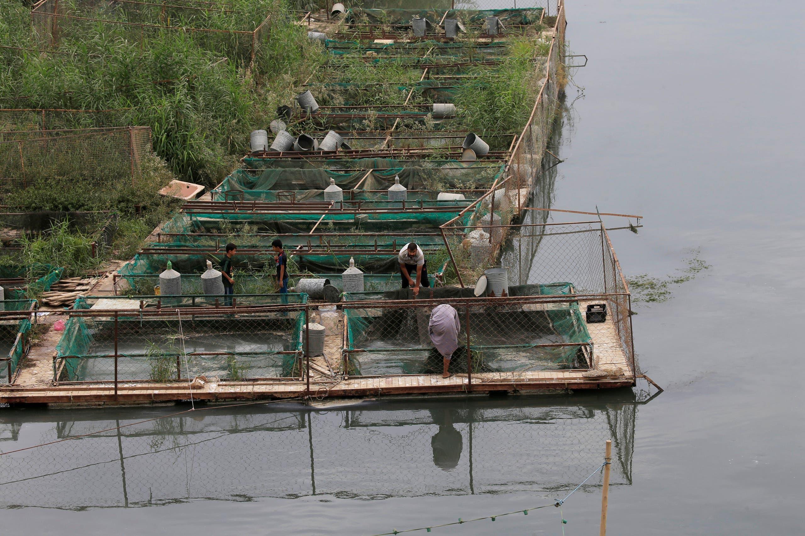 مزارعون على نهر الفرات في العراق