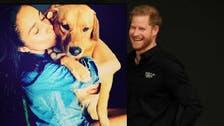 كلب تبنته ميغان ماركل كان ينزعج من زوجها الأمير هاري