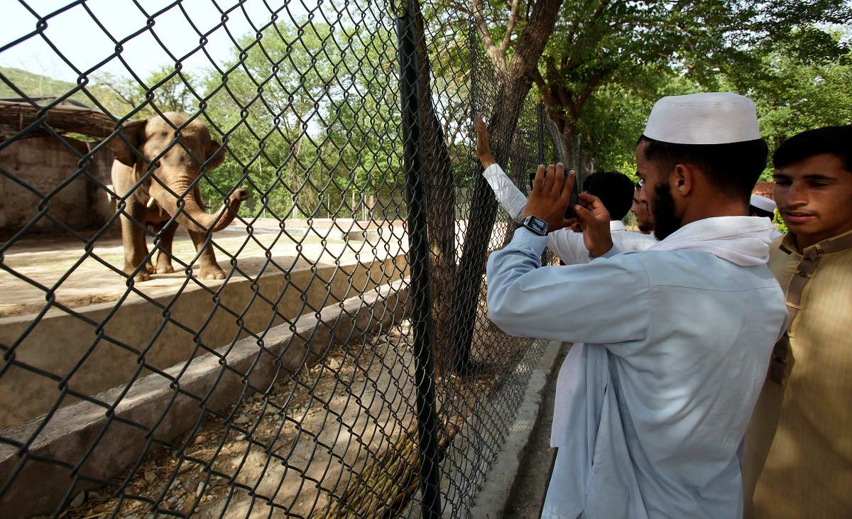 The plight of Kaavan, a mentally tormented bull elephant confined to a small pen in the Islamabad Zoo for nearly three decades, has galvanized a rare animal rights campaign in Pakistan, which has brought the issue to the floor of parliament. (AP)