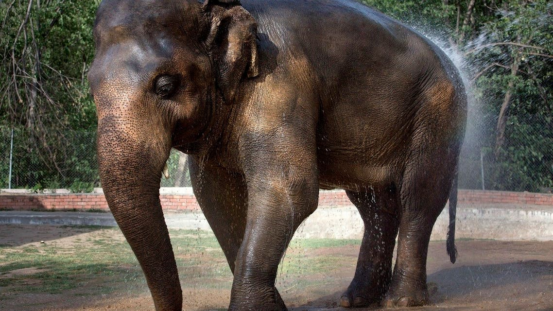 In this Thursday, June 2, 2016, elephant 'Kaavan' takes a bath at Marghazar Zoo in Islamabad, Pakistan.  (AP)