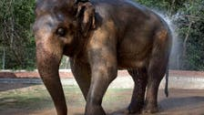 Pakistani court approves moving elephant 'Kaavan' to Cambodia