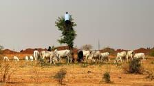 نائیجیریا میں ہتھیار پھینکنے پر دو گائے دینے کی منفرد حکومتی پیش کش