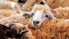 Coronavirus: UAE urges people to order Eid al-Adha animal sacrifices, gifts online