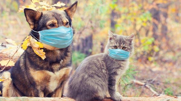 مفاجأة عن القطط والكلاب.. أجسام تصد نوعا جديدا من كورونا