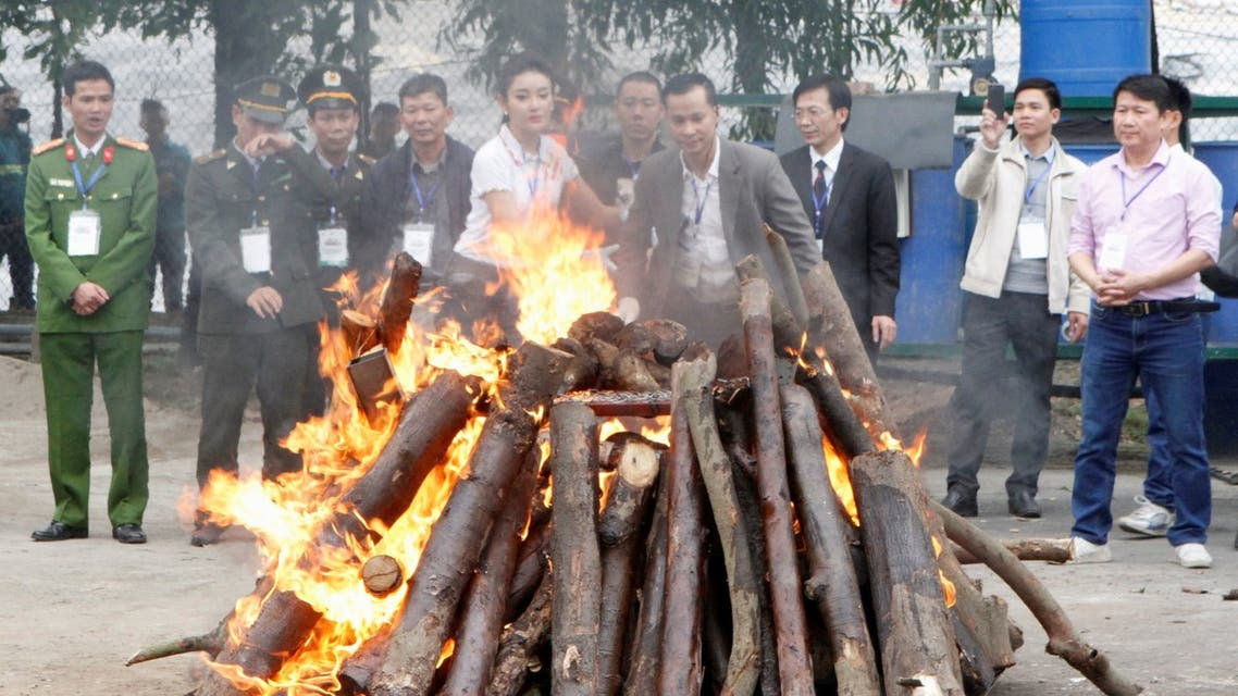 Seized elephant ivory and rhino horns are destroyed by Vietnamese authorities in Hanoi November 12, 2016. (File photo: Reuters)
