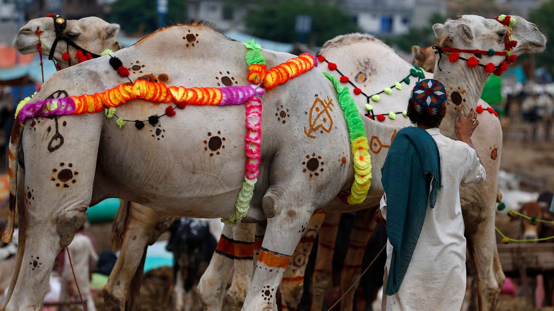 A vendor decorates his camel to attract customers at a cattle market set up for the upcoming Muslim festival Eid al-Adha in Islamabad on July 26, 2020. (AP)