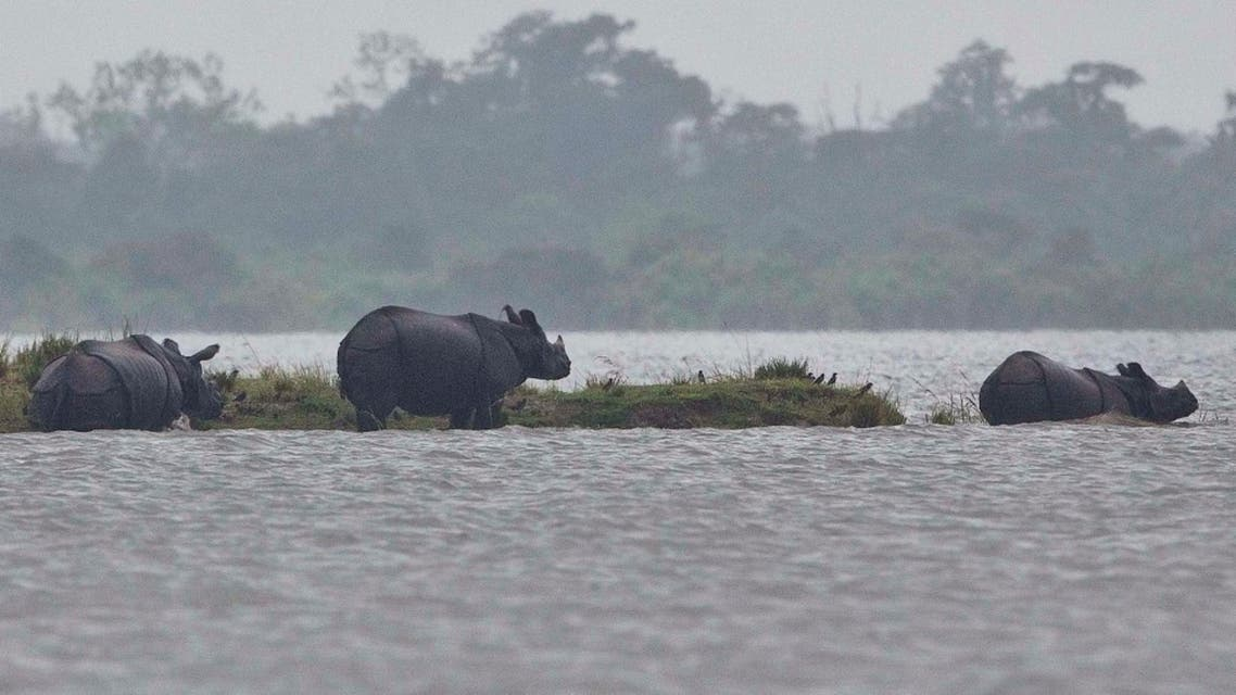 In this Monday, July 10, 2017, file photo, One horned Rhinos take shelter on higher ground of a flooded Kaziranga national park in Kaziranga, 250 kilometers (156 miles) east of Gauhati, India.