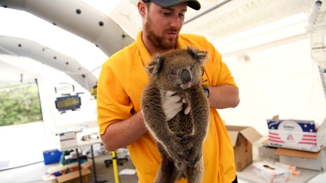 An injured koala is treated by RSPCA vet at the Kangaroo Island Wildlife Park, at the Wildlife Emergency Response Centre in Parndana, Kangaroo Island, Australia, on January 19, 2020.  (Reuters)
