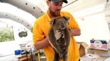 About 3 billion animals harmed in Australian bushfires in last two years, WWF says