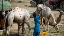 Coronavirus: Pakistan car washer cleans animals for Eid al-Adha